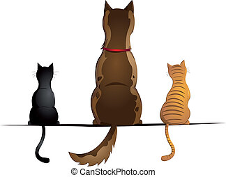katzen, hund