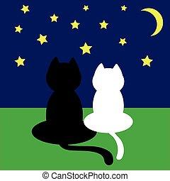 katzen, nacht