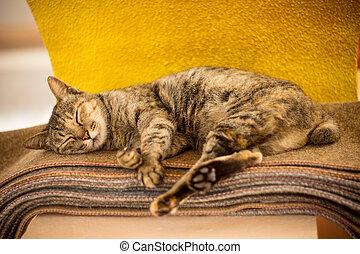 katzen, schlaf