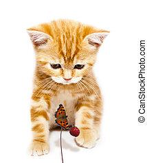 katzenkinder, und, papillon