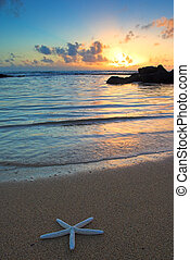 Kauai, spiaggia, Hawai,  starfish, tramonto
