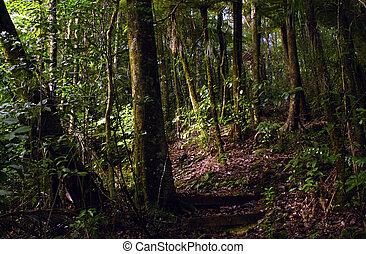Kauri Puketi Forest