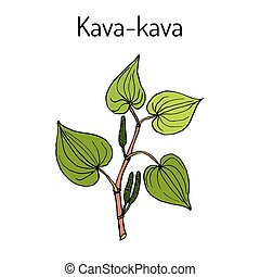 Kava-kava piper methysticum , medicinal plant. Hand drawn...