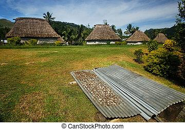 kava, radice, essiccamento, in, navala, villaggio, viti levu, isola, figi