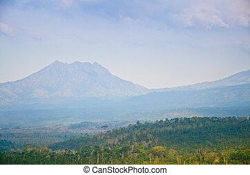 kawa, plantacja, na, wschód, jawa, indonezja