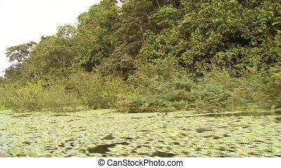 Kayak On Amazon - Amazon River, Southamerica