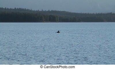 kayaker, in, jackson see, yellowstone