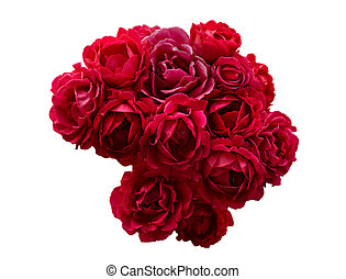 keř, o, červené šaty vstával, květiny, osamocený, oproti neposkvrněný