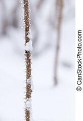 keř, sněhové vločky, filiálka, zima