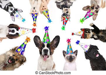 kedvenc, állatok, elszigetelt, fárasztó, születésnap, kalapok, helyett, egy, fél