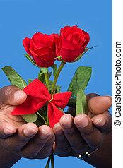 kedves, agancsrózsák