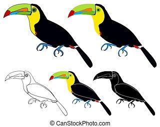 keel billed toucans bird colored - Vector art.