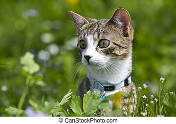 Keen Cat - A attentive Cat in the green Grass