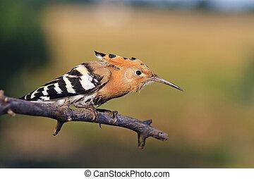 Keep Calm and Carry On,bird is hidden - Keep Calm and Carry...