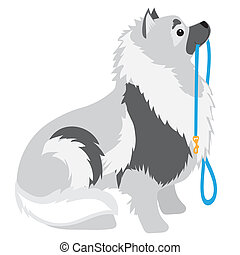 Keeshond Leash - A Keeshond sitting with a leash in its...