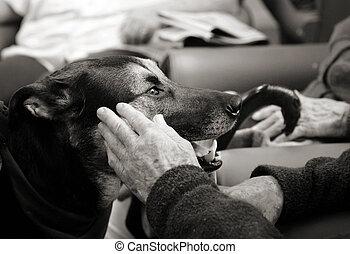 kela terapi, hund