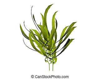 3D illustration of a kelp