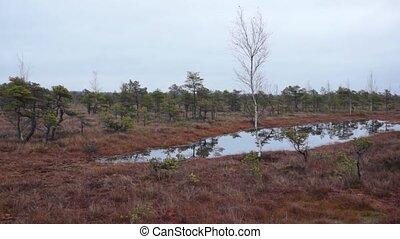 Kemeri swamp landscape in Latvia - Kemeri swamp landscape at...