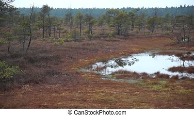 Kemeri swamp landscape in Latvia - Kemeri swamp landscape at...