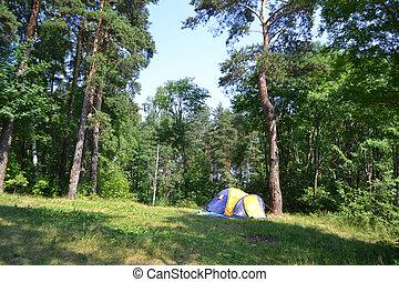 kempingezés sátor, és, erdő