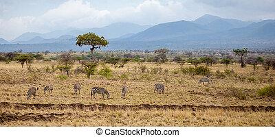 kenia, landschaftsbild, hügel, bäume, tiere