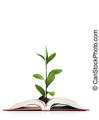 kennis, concept, -, bladeren, groeiende, uit, van, boek