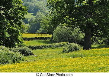 kentish, 시골, 영국