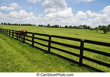 Kentucky Bluegrass Region. Pastoral Kentucky countryside with thoroughbreds grazing and miles of wooden fencing. Kentucky is famous for it's large thoroughbred farms and breeding facilities.