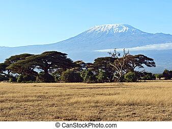 kenya, アフリカ, サバンナ