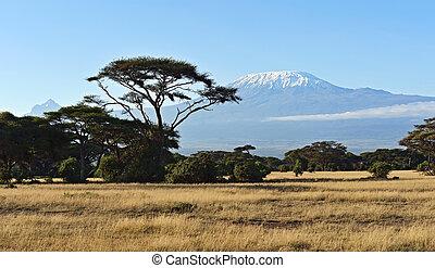 kenya, africano, savanna