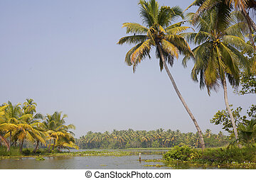 kerala, indien, bäume, backwaters, handfläche, genommen