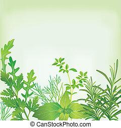 keret, közül, friss fűszernövény