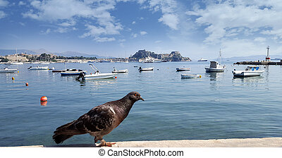 kerkyra, pintoresco, paloma, yates, bahía, frente