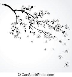 kers, bloeiend, japanner, tak