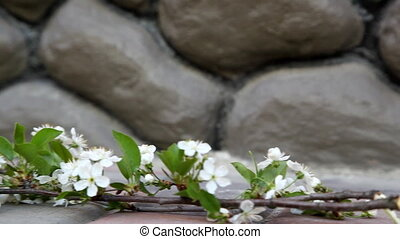 kers, bloem