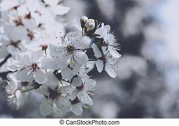 kers, bloemen, abstract, lente, achtergronden