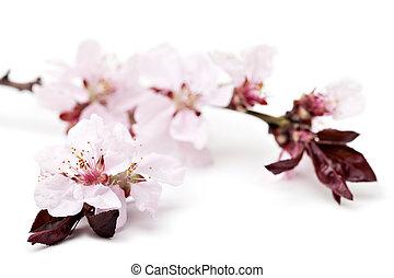 kers, bloemen