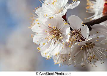 kers, bloemen, tak