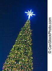kerstboom, op de avond