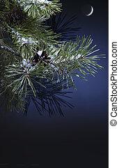 kerstmis, nacht