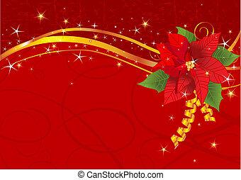 kerstmis, poinsettia, achtergrond