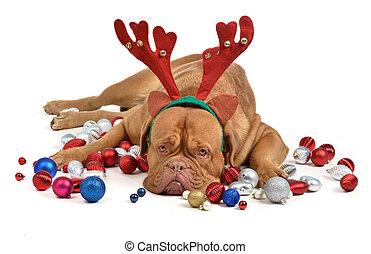 kerstmis, rendier, baubles, dog