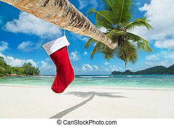 kerstmis, sok, op, palmboom, op, exotische , tropisch strand