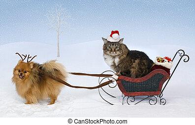 kerstmis, voor, max., &, jolie