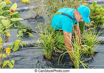 kertész, munka, profi