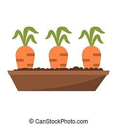 kert, ágy, sárgarépa, kép