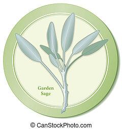 kert, bölcs, fűszernövény, ikon