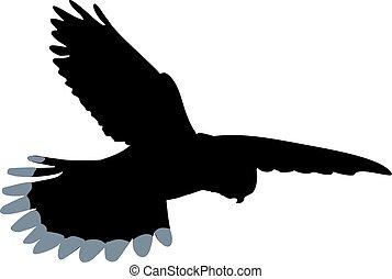 Kestrel silhouette