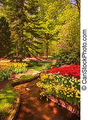 keukenhof, нидерланды, сад, trees., тюльпан, цветы