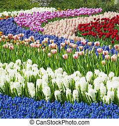 keukenhof, 정원, lisse, 네덜란드